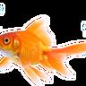 Avatar of RishtheFish