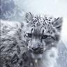 Avatar of Dark Night Wolf