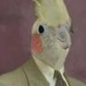 Avatar of Mr. Bird
